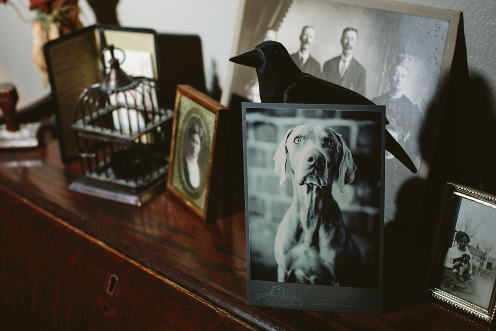 Dewitz Photography Cabinet Card Dog Displayed on Wood Cabinet