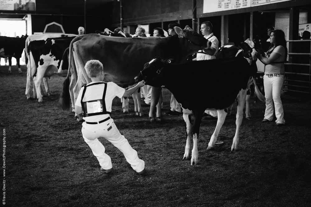Northern Wisconsin State Fair Boy Pulling Cow