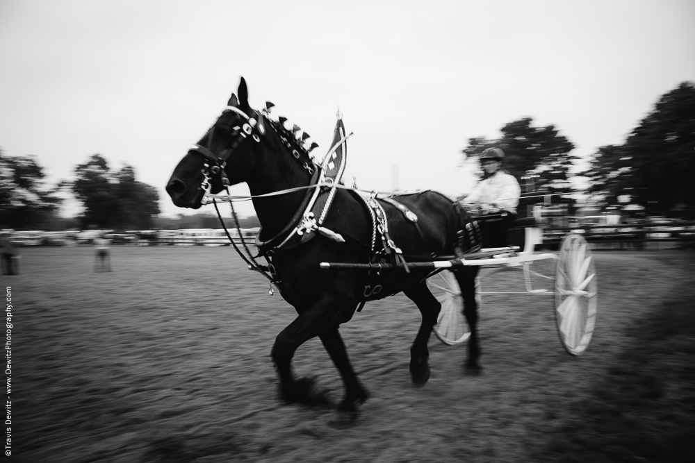 Northern Wisconsin State Fair Draft Horse Running with Cart