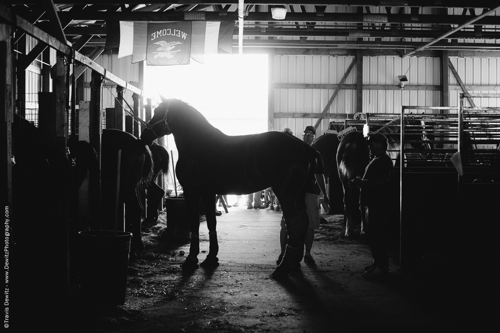 Northern Wisconsin State Fair Horse Silhouette
