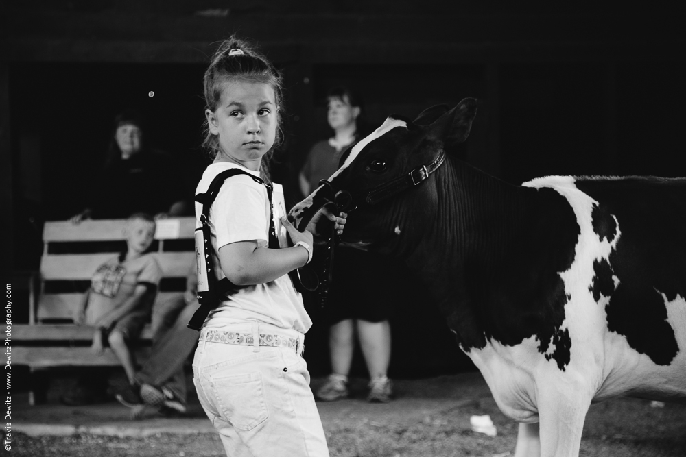 Northern Wisconsin State Fair Little Girl With Calf
