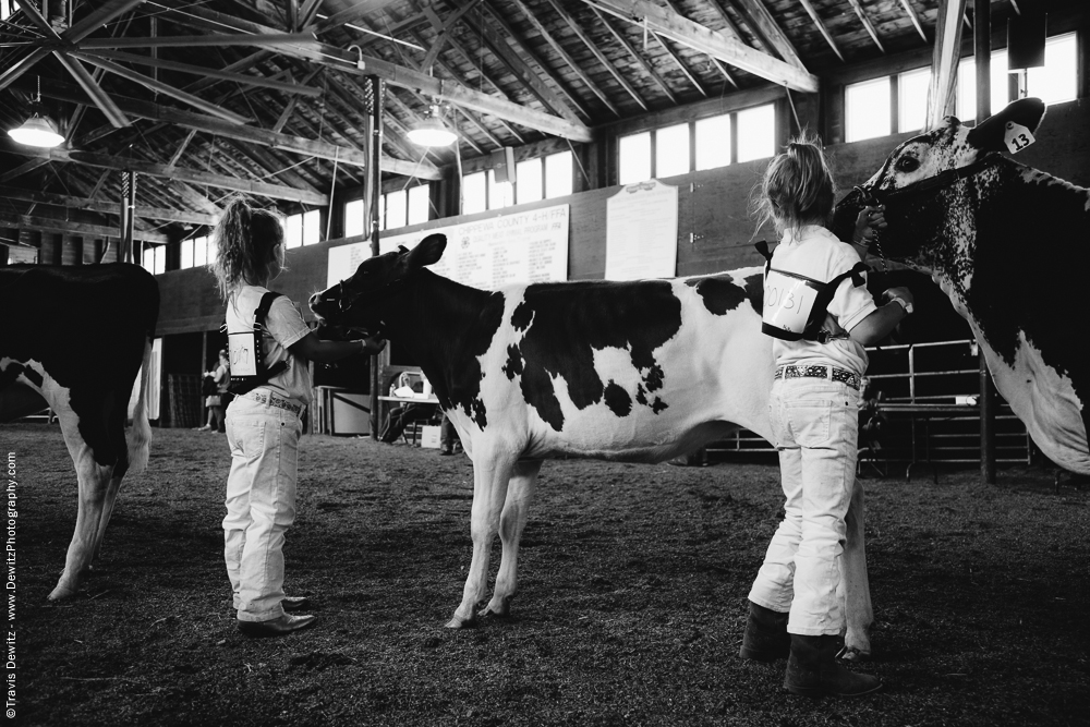 Northern Wisconsin State Fair Little Girls with Calves