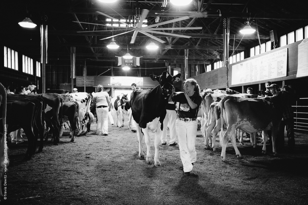 Northern Wisconsin State Fair Showing Dairy