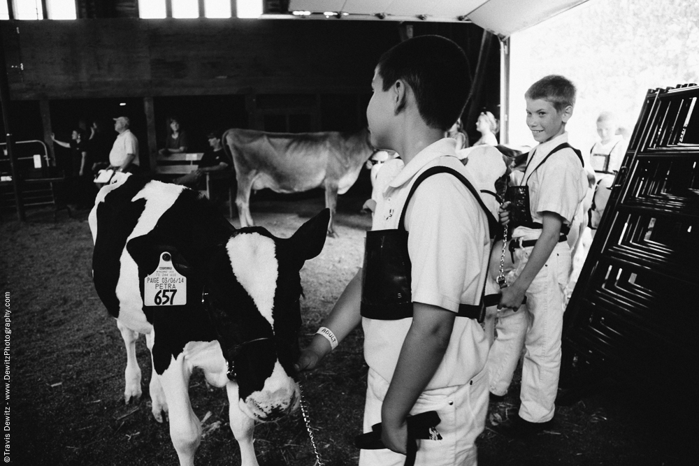 Northern Wisconsin State Fair Young Boys Showing Calves