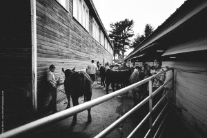 Northern Wisconsin State Fair Cattle Auction-7666