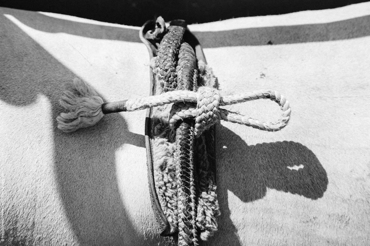 10-Bull Rope Tied Knot-3241