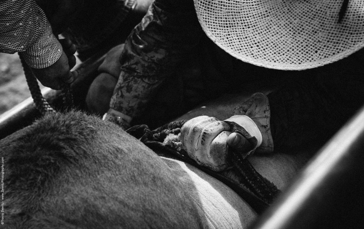 Bull Rider Tightens Bull Rope on Leather Glove-3311