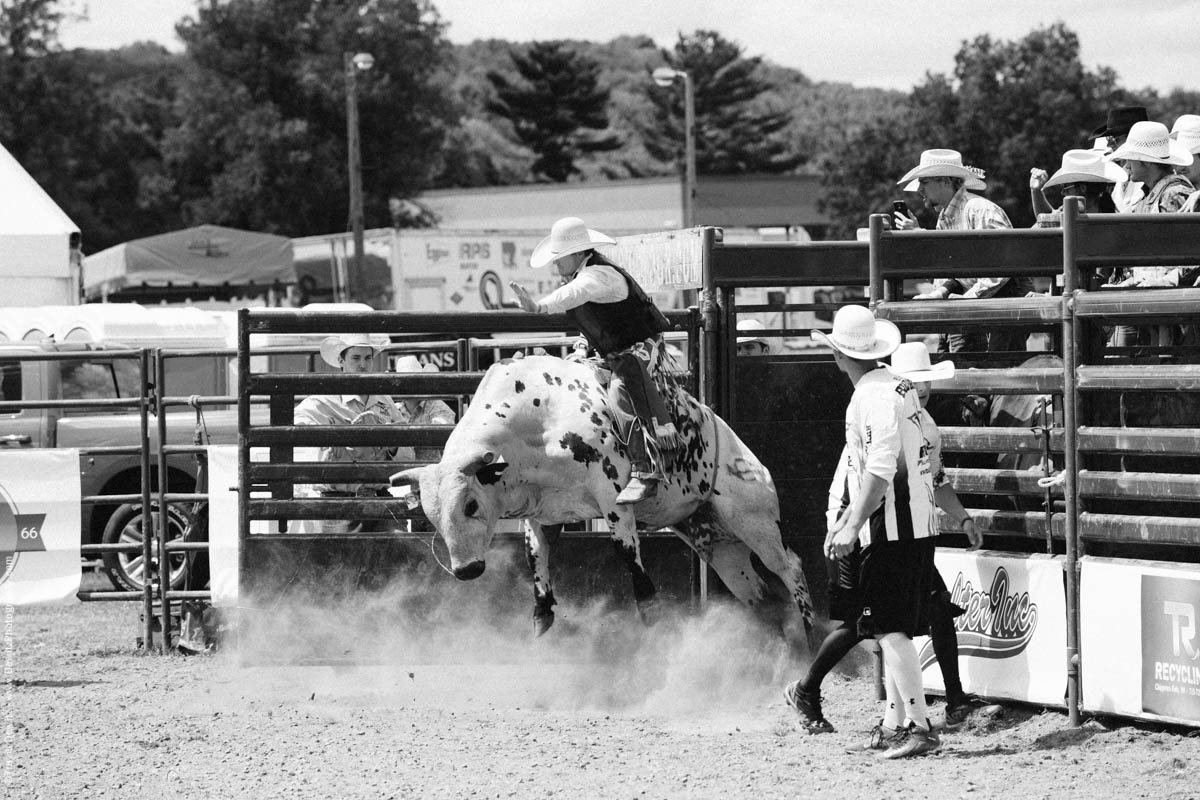 Bull Rider out of the Gate White Bull-2818