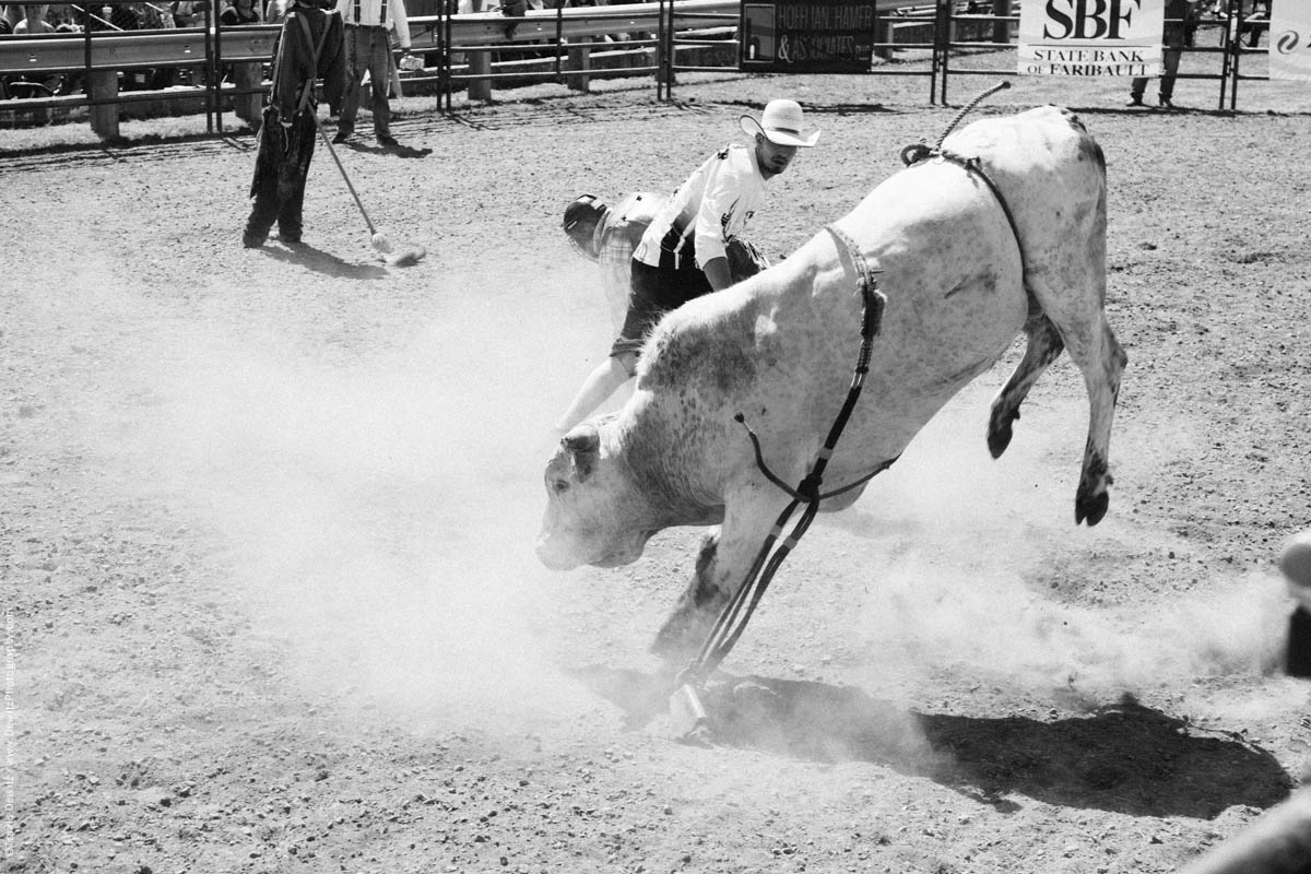 White Bull in Arena Bucking-3173
