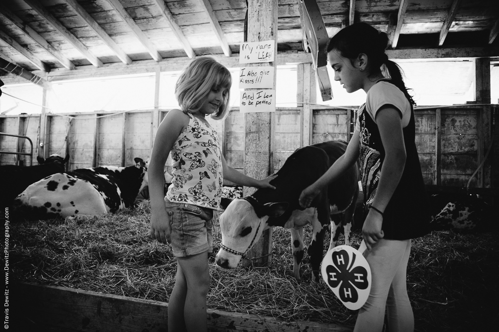 Northern Wisconsin State Fair 4H Girls Petting Calf