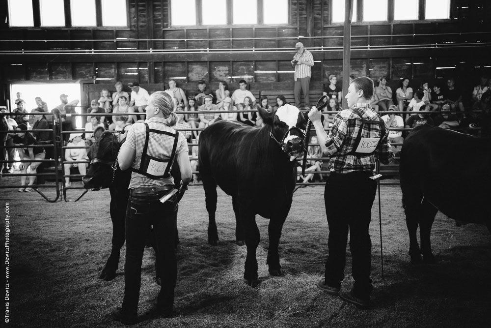 Northern Wisconsin State Fair Boy and Girl Showing Cattle