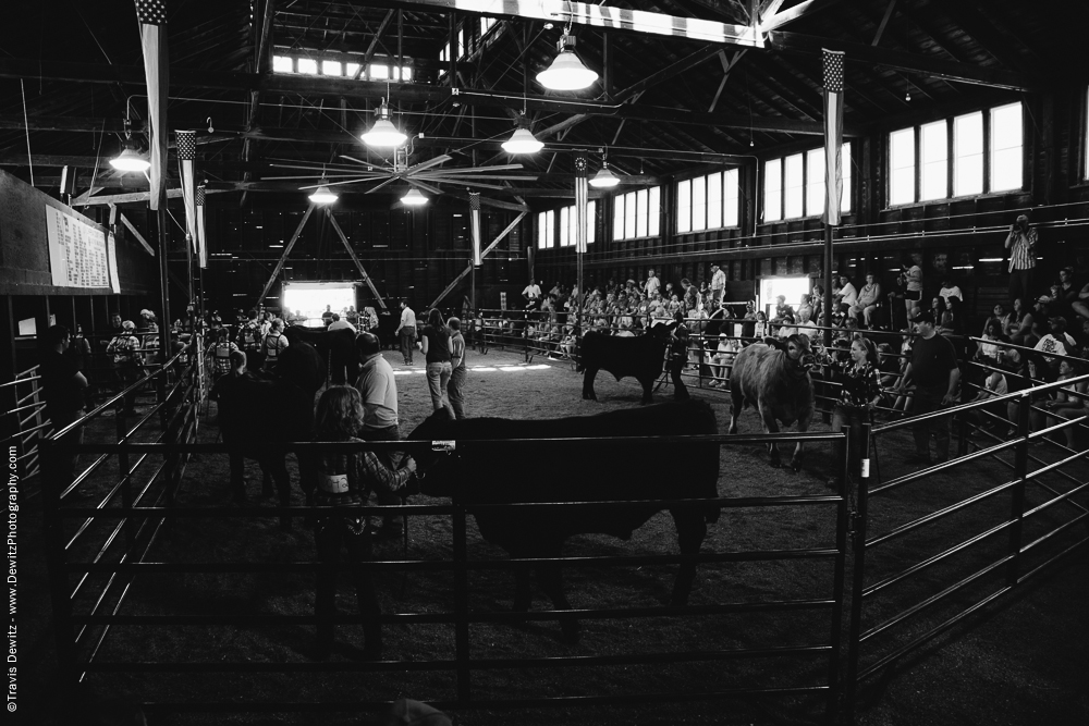 Northern Wisconsin State Fair Cattle Show in Arena
