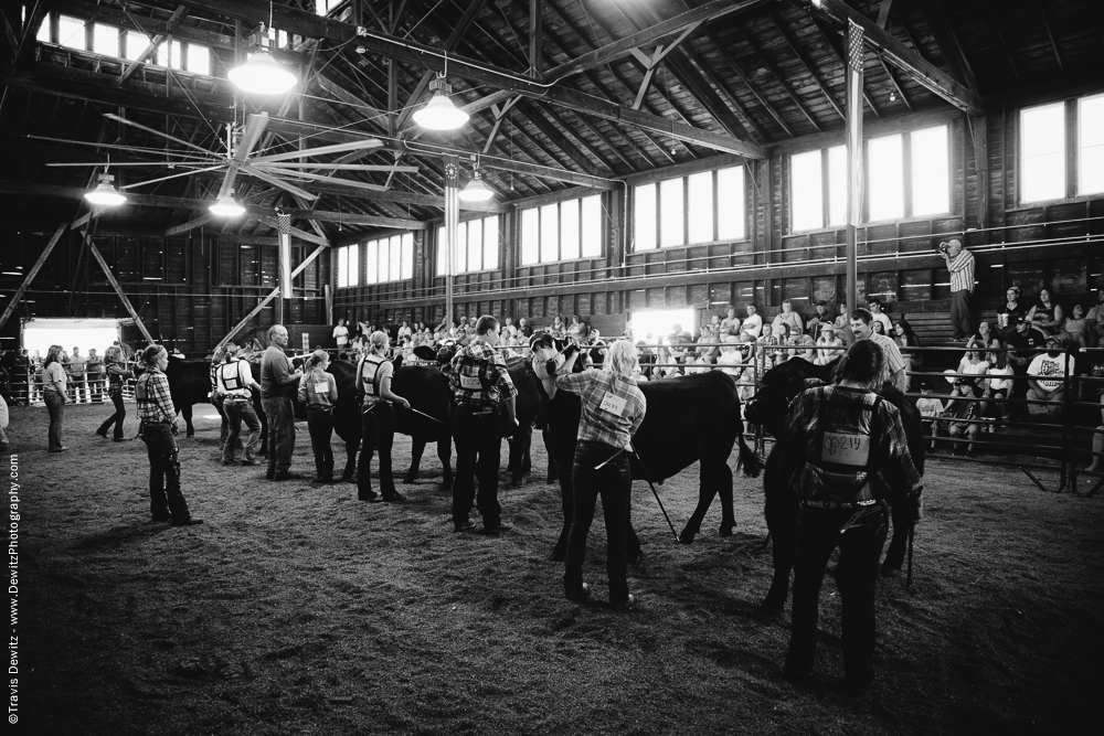 Northern Wisconsin State Fair Cattle Show