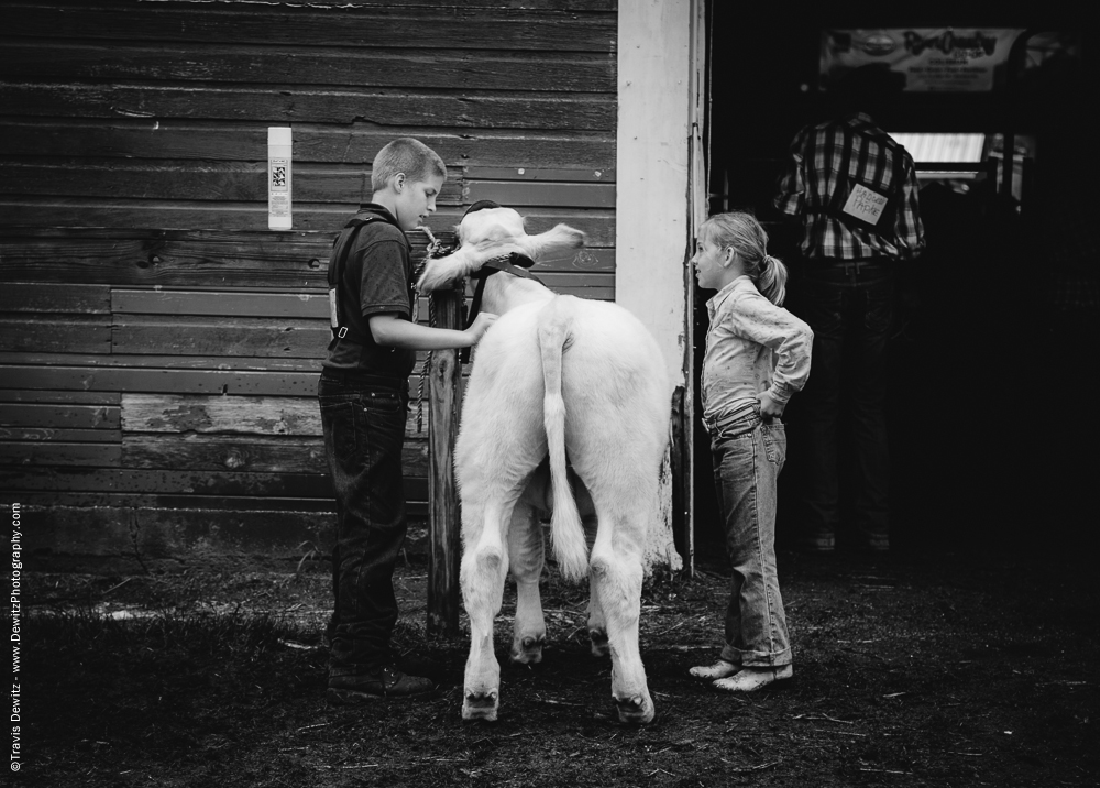 Northern Wisconsin State Fair Girl Boy and White Calf