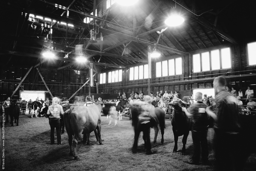 Northern Wisconsin State Fair Motion at the Cattle Show