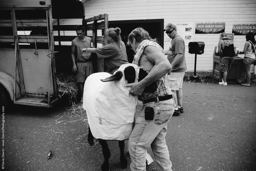 Northern Wisconsin State Fair Unloading Sheep