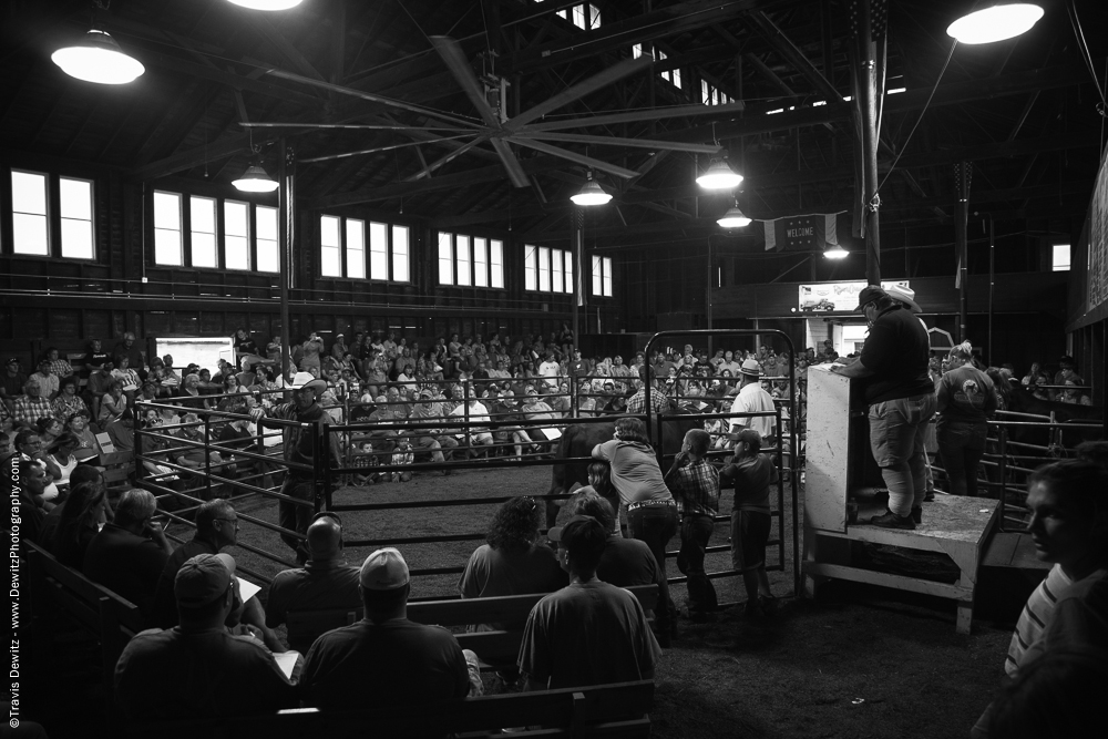 Northern Wisconsin State Fair Watching Bidding