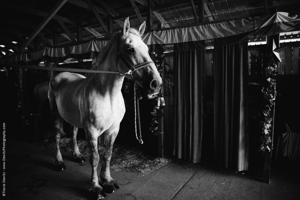 Northern Wisconsin State Fair White Horse Portrait