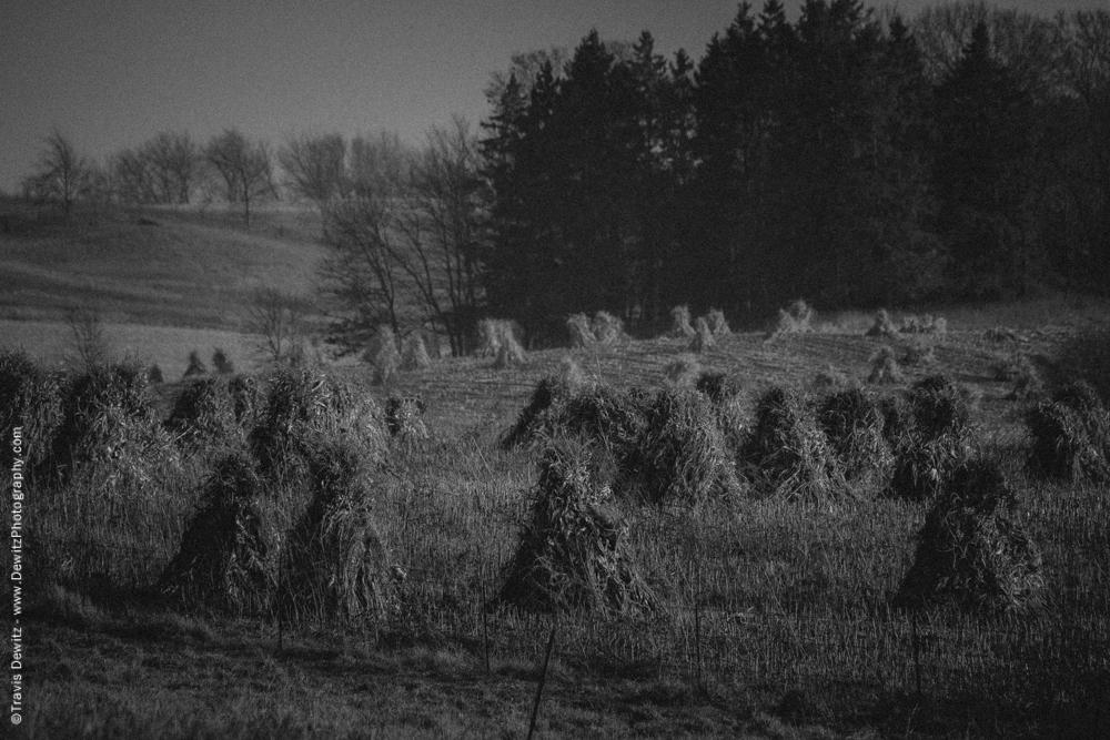 Amish Tied Corn Stalks