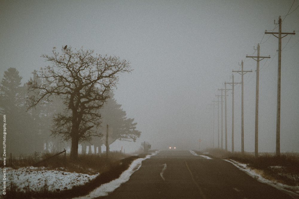 Eerie Tree Along Lonely Foggy Road