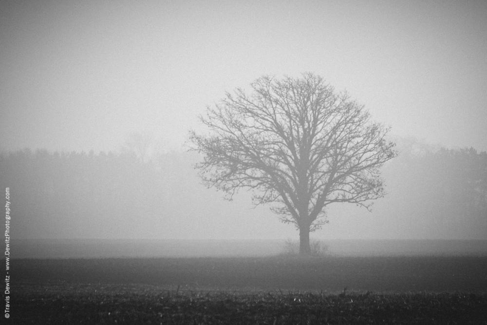 Lone Foggy Tree