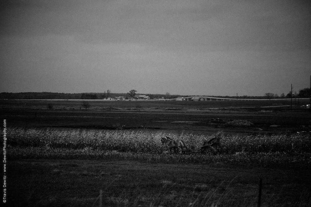 Amish Man Cutting Corn - Augusta, WI