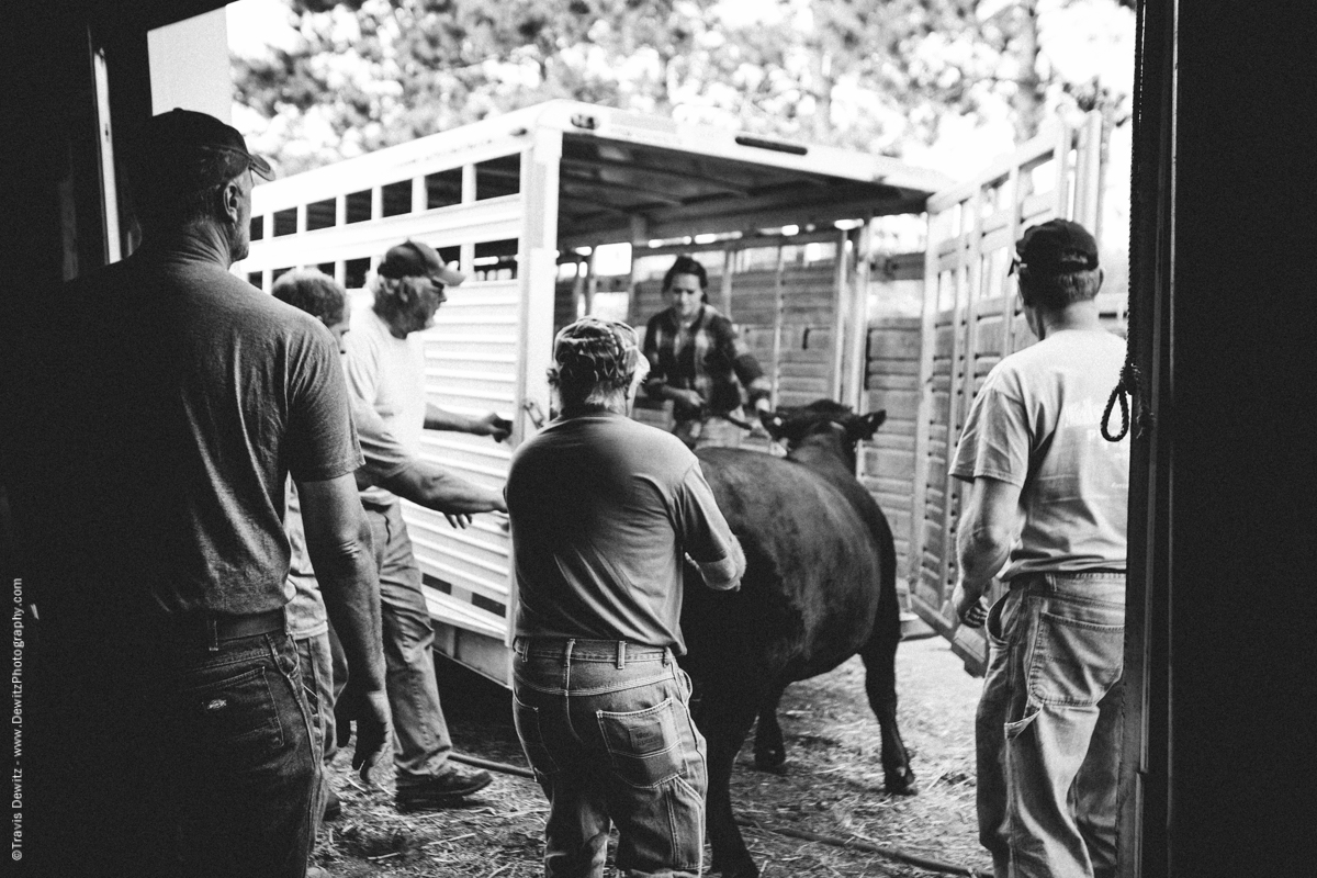 Northern Wisconsin State Fair Cattle Auction-7632
