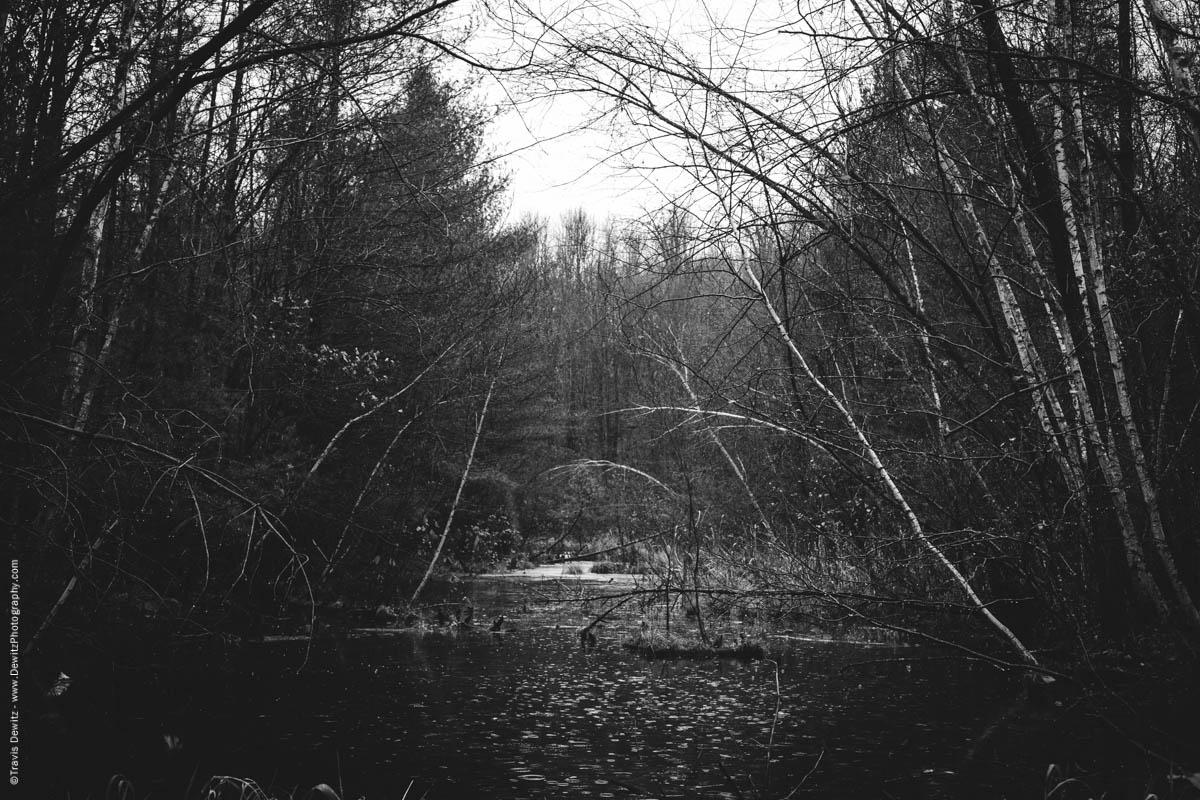 marshy-area-elk-lake-wi-historic-city