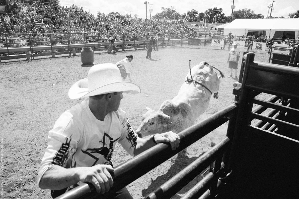 1-Bull Chases Bull Fighter-3174