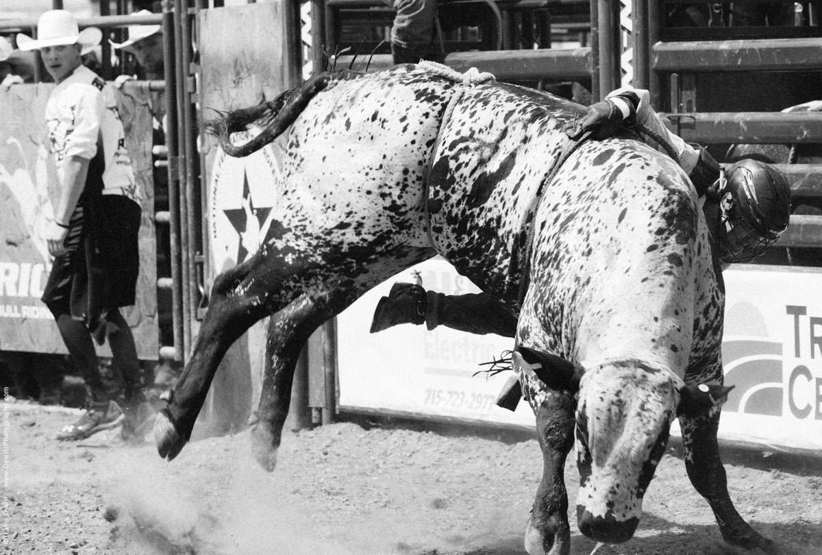 Bull Rider Hangs on After Being Thrown Off-2836