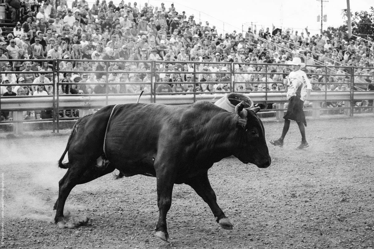 Bull Runs Around Dusty Ring-2894