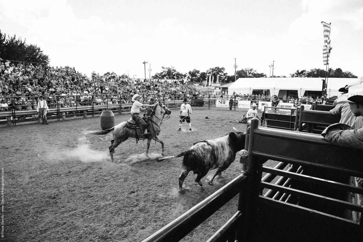 Cowboy Lassos Running Bull-3196