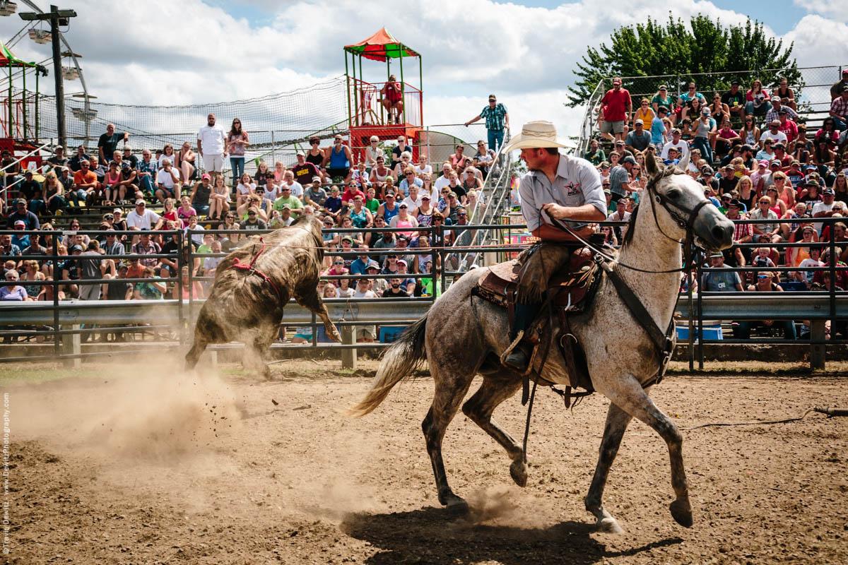 Cowboy Ropes Muscular Angry Jumping Bull-3080