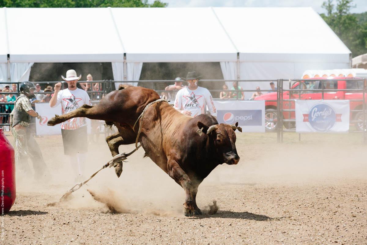 Kicking Bull in Dust-2803