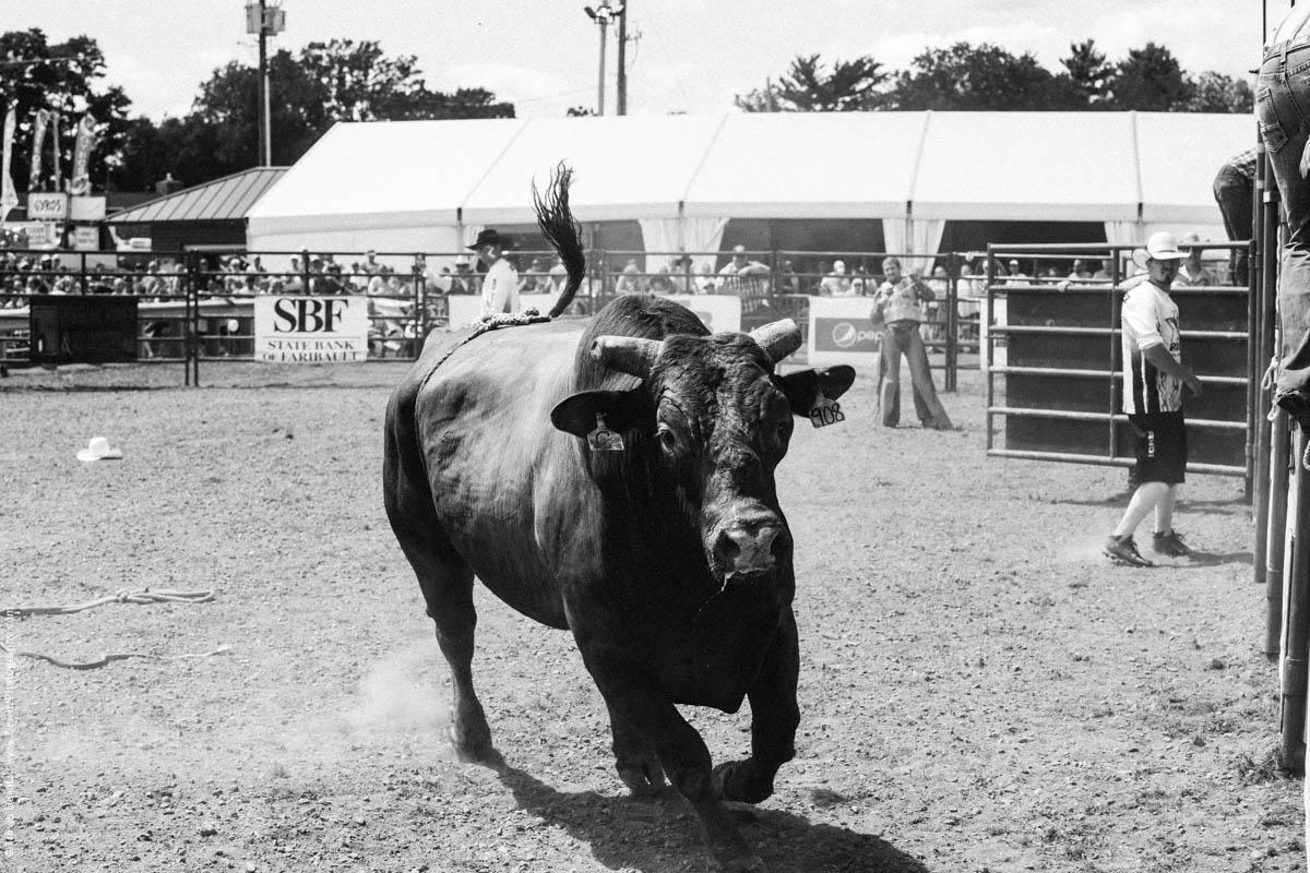 Mean Running Bull-2885