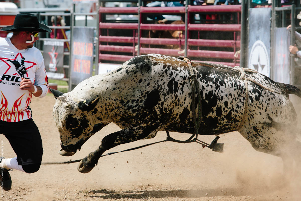 Rodeo Bull Fighter Being Chased-2839