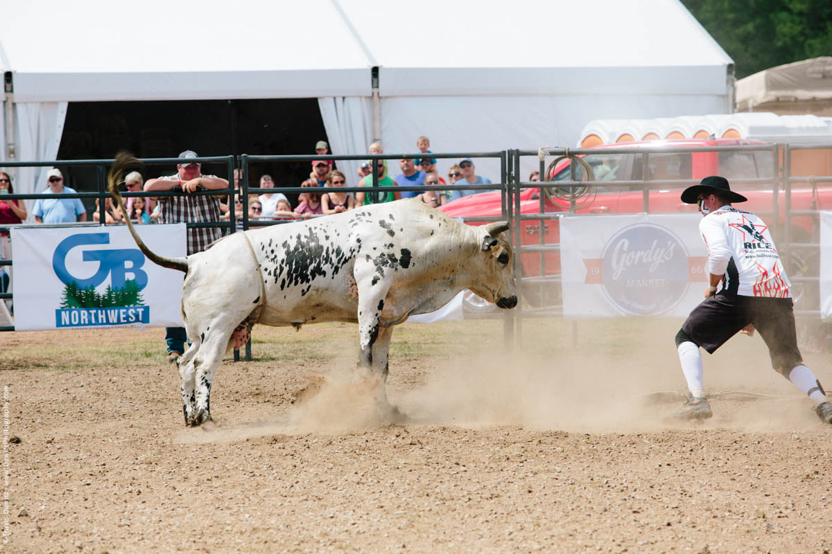 Strong Posed Bull in Dusty Arena-2823