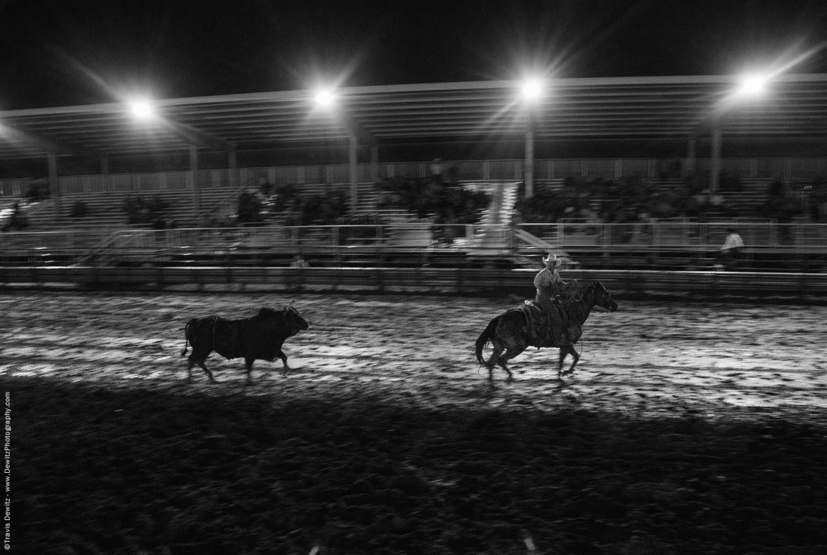 bull-in-mud-lassoed-5587