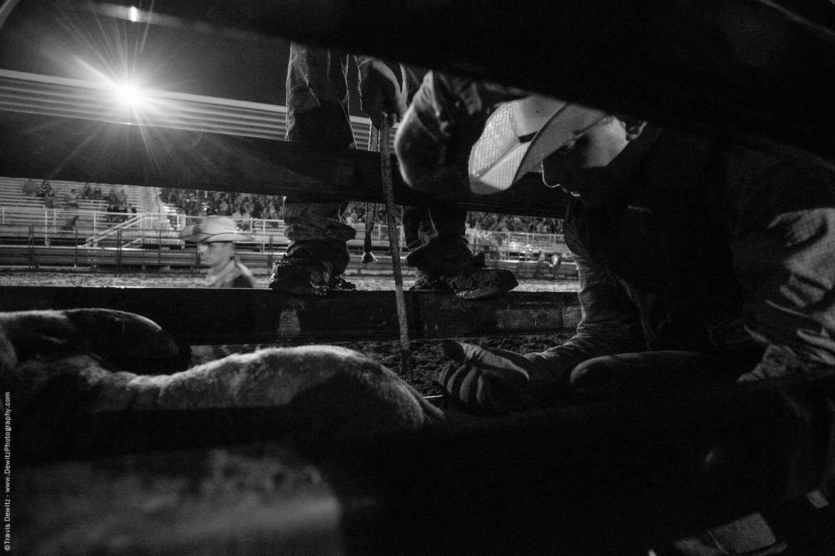 bull-rope-tightens-in-chute-night-bull-riding-5356