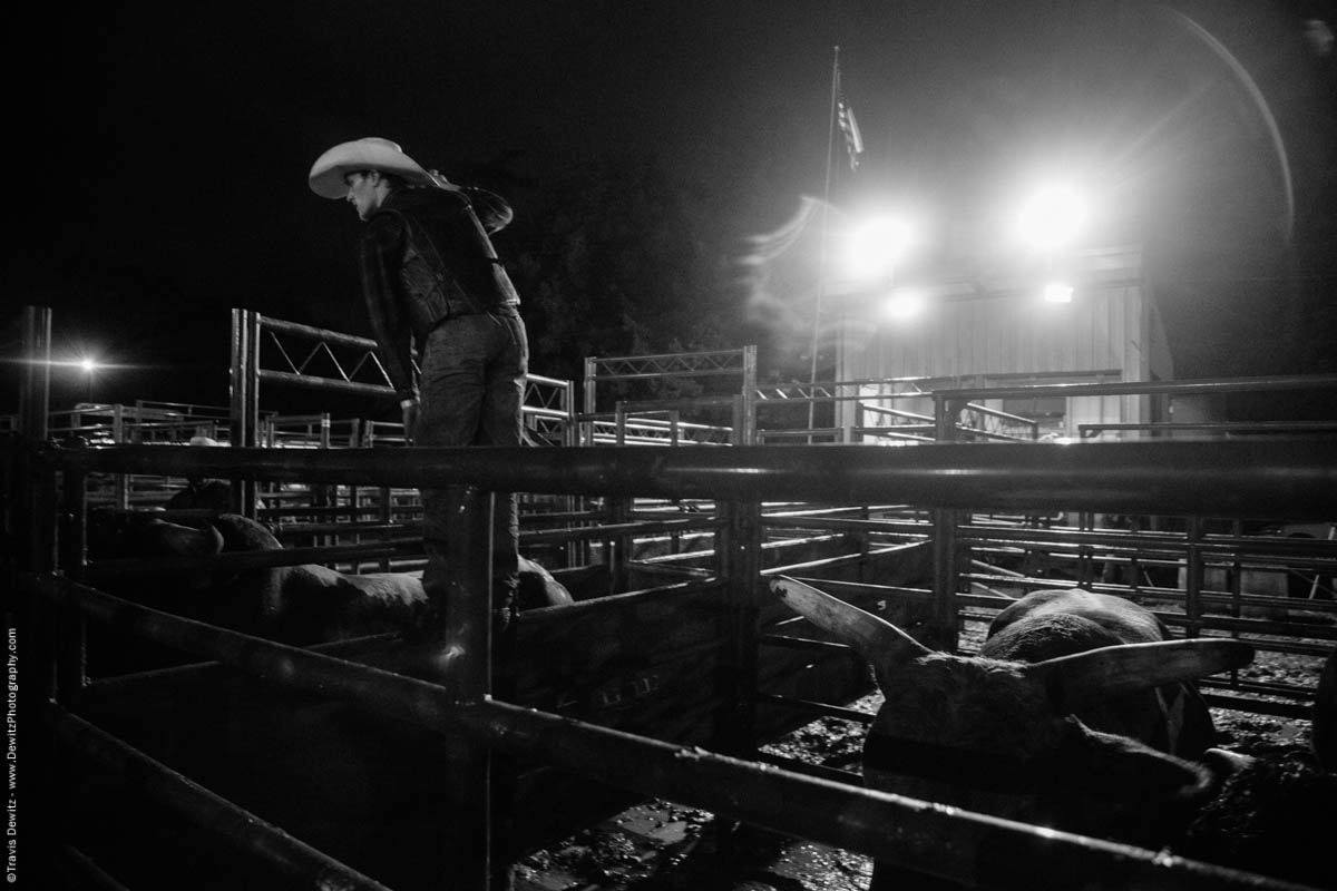 cowboy-directs-bulls-night-rodeo-5301