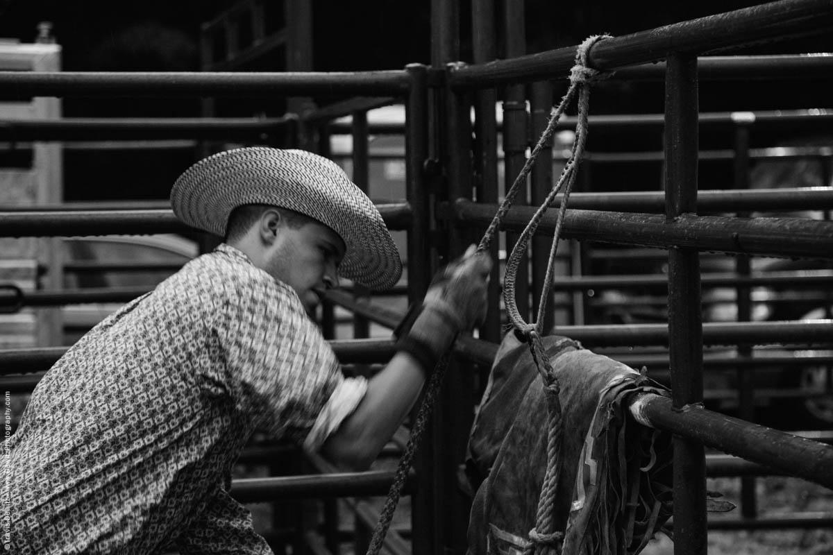 cowboy-rosining-bull-rope-4512