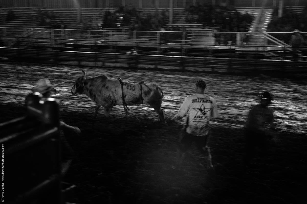 loose-bull-at-night-5505